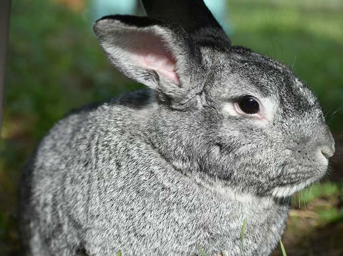 Heartland Rabbit Rescue Animal Shelter Blanchard OK