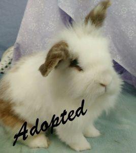 wilbur-adopted